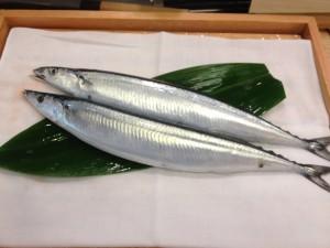 新物秋刀魚